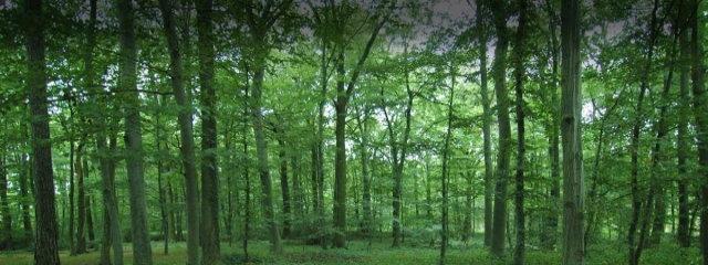 Forest Management & Forest Engineering Studies